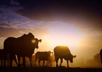True Beef Tour | AUSTRALIA